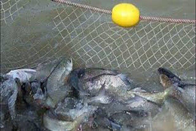 اخذ موافقت برای صید 5تن ماهی از سدشیرین دره به منظور افزایش کیفیت آب، وجود100تن ماهی در سد