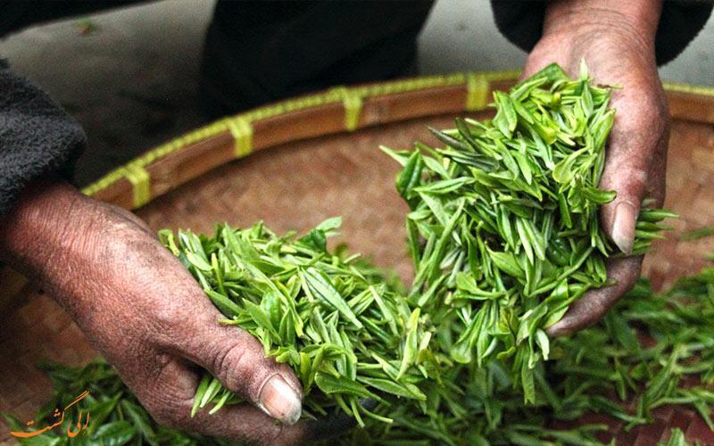 بهترین مزارع چای جهان در کدام کشورها قرار دارند؟