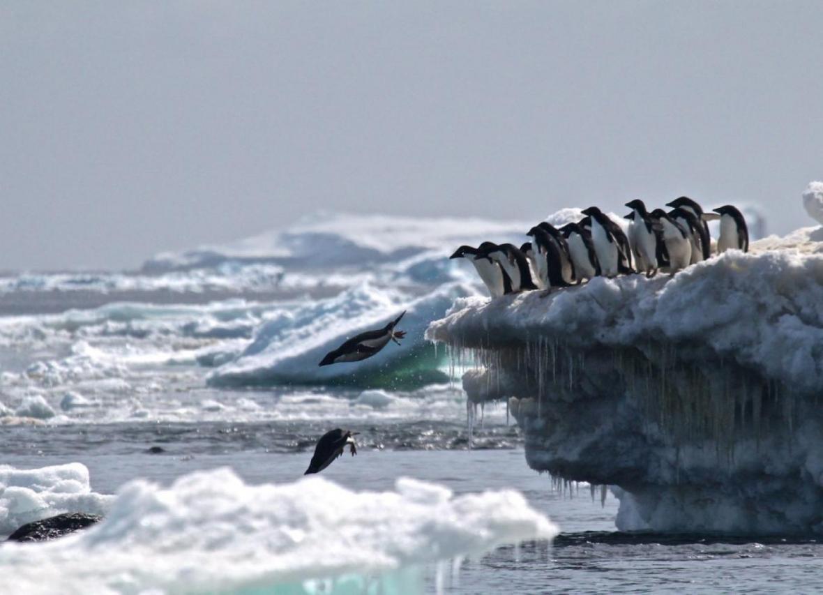ذوب بی سابقه یخ های شناور قطب جنوب