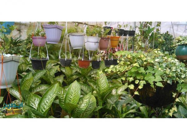 فراوری 50 میلیون گل و گیاه در محمودآباد